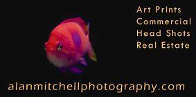 Business card for Mitchell Photography